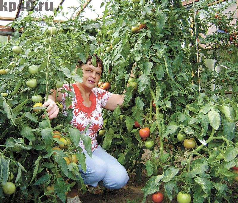 Сайт урожайный огород татьяна видео